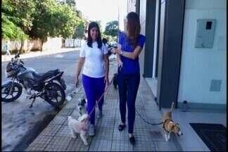 Gestora comercial de Divinópolis conta como é mais feliz após mudar profissionalmente - Marcela de 26 anos, atualmente, é dona de um centro de estética animal.