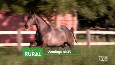 Veja os destaques do Mirante Rural - Confira as notícias do agronegócio que serão destaque neste domingo (7).