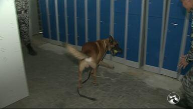 Veja como é o treinamento dos cães do Biesp, em Caruaru - Animais são importantes para o batalhão e para auxiliar no combate à violência.