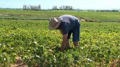 Falta de chuva em Santa Maria prejudica desenvolvimento das plantas - Veja essa e outras notícias da semana no setor do agronegócio.