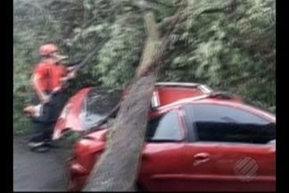 Chuva forte provoca queda de árvore no bairro do Guamá em Belém - Carro que estava estacionado próximo foi atingido.