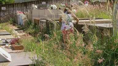 Abandono do cemitério de São José do Rio Pardo revolta visitantes - Prefeitura informou que a limpeza não foi feira nos últimos dois meses por conta do excesso de chuva e que providenciará a retirada do mato na próxima semana.