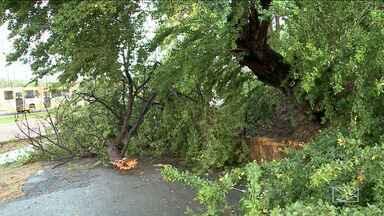 Chuva provoca estragos na Região Metropolitana de São Luís - Chuva que caiu durante a madrugada desta sexta-feira (19) deixou estragos.