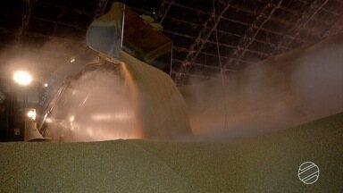 Alta procura por milho no mercado facilita esvaziamento dos armazéns em MS - Os armazéns precisam ficar liberados para receber a nova safra de soja.