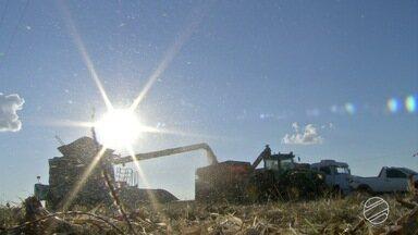 Produção de grãos evolui diariamente devido agricultores de MS - A produção de soja aumentou quase vinte vezes desde a criação do estado.