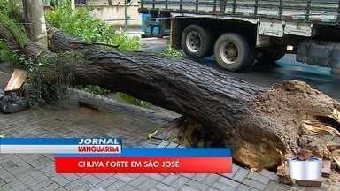 Chuva forte derrubou árvores e causou alagamentos em São José - Trânsito na avenida José Longo ficou congestionado depois da chuva.