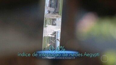 Levantamento aponta aumento na quantidade do mosquito Aedes Aegypti - Assista a seguir.