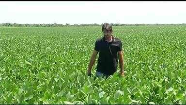 Produtores rurais do Tocantins devem realizar o cadastramento de lavouras de soja - Produtores rurais do Tocantins devem realizar o cadastramento de lavouras de soja