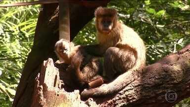 Macacos estão sendo mortos por causa da febre amarela - Isso é um erro enorme, pois o animal não transmite o vírus. A orientação do Governo Federal é acompanhar as mortes de macacos para controlar a febre amarela.