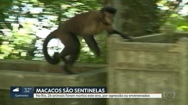 Macacos são vítimas de agressões - Os animais ajudam pesquisadores a mapearem onde o vírus está circulando.