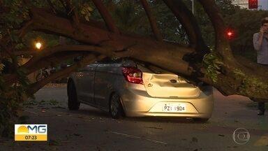 Árvore cai e atinge veículos em Belo Horizonte - Não houve feridos.