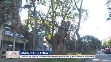 Árvores de Belo Horizonte recebem manutenção para evitar quedas durante o carnaval - O trajeto de vários blocos está sendo verificado para avaliar o risco de quedas de árvores.