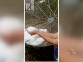 Temporal de granizo causa estragos na região - Lavouras de soja foram atingidas na tarde de ontem