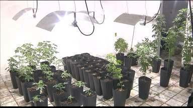 Casa é encontrada com plantação de 200 pés de maconha em Santa Rita - Local funcionava como laboratório da droga e estufa com iluminação artificial e ar condicionado.