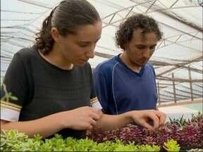 Família de Passo Fundo, RS, aposta no cultivo de plantas ornamentais e comestíveis - Iniciativa vem garantindo renda e trabalho para o casal