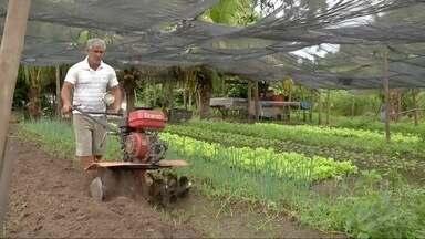 Produção agroecológica familiar garante qualidade e produtividade em Três Lagoas, MS - Os moradores da região compram os produtos orgânicos na feira local.