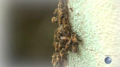 Resolvido: abelhas são removidas de muro após denúncia no BMD - A reportagem foi ao local conferir a resolução do problema. Envie sua denúncia para bmd@redebahia.com.br.