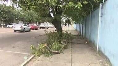 Retiradas de árvores sem autorização em Macapá podem gerar multas e infrações - Secretaria de Meio Ambiente alerta sobre as penalidades da ação indevida e informa o procedimento de pedido de remoção ou poda da vegetação na zona urbana.