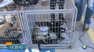 Exposição de animais para adoção em João Pessoa - Saiba o que é preciso para adotar um bichinho.