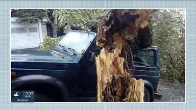 Árvore de grande porte cai em cima de carro na Zona Sul de SP - Árvore caiu na Rua Palmares, na região do Brooklin. Ninguém se feriu.
