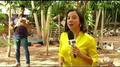 Veja os destaques do Jornal do Campo deste domingo (4) - Veja os destaques do Jornal do Campo deste domingo (4)