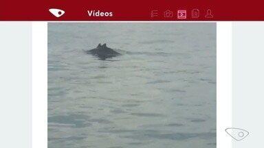 Golfinhos se divertem na Baía de Vitória - Quem filmou foi o Carlos Salles. Veja as imagens!