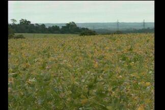 Chuva ajuda na reta final da safra de soja - A expectativa é de uma boa colheita que já começou.