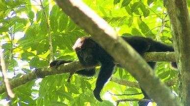 Bugios recebem cuidados no interior de Santa Catarina (Bloco 01) - Centro de reabilitação de primatas resgata espécies debilitadas.