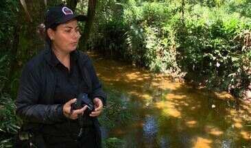 Pato-mergulhão é redescoberto em São Paulo - Vigilante registrou espécie rara em Salesópolis (SP).
