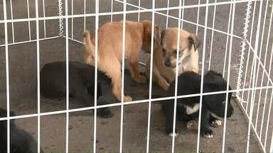 Filhotes de cachorro são abandonados em pet shop de Maringá - Feira de adoção é realizada no centro da cidade.