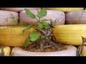 Bom Exemplo: Conheça o trabalho do artista plástico Quirino Rosa - Artista utilizou pneu para barreiras de contenção.
