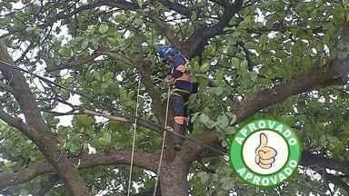 Moradores do Cristo Redentor recebem serviço de poda em Corumbá - Os moradores do local estavam enfrentando problemas por causa de árvores.