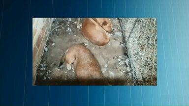 Cães podem ser responsáveis por ataques à sítio - Aves, ovelhas e gatos foram mortos nas propriedades.