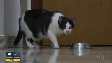 Bom Dia Bicho: Saiba quais alimentos podem ser dados aos animais de estimação - Coluna Bom Dia Bicho mostra as curiosidades dos animais de estimação.