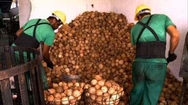 Fábrica de beneficiamento de coco volta a funcionar depois de mais de uma década fechada - Tudo é aproveitado pela Cooperativa de Piaçabuçu.