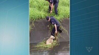 Cão é resgatado de canal após temporal em Praia Grande - Cachorro caiu dentro de canal cheio e conseguiu se salvar ao encontrar planta para se sentar e não ser levado pela água.