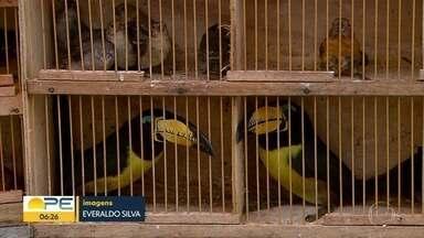 Dois homens são presos por vender animais silvestres no Recife - Eles estava comercializando os animais no bairro do Cordeiro, na Zona Oeste
