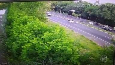 Gado solto atravessa novamente avenida no distrito de Sousas em Campinas - Vídeo feito por morador mostra mesma situação registrada na última semana na Avenida Mackenzie.