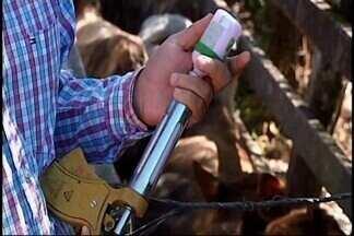Vacinação contra a febre aftosa está disponível para produtores de Araxá e Tapira - Primeira etapa anual da vacinação para bovinos e bubalinos ocorre até 31 de maio. A vacinação é acompanhada pelos fiscais do Instituto Mineiro de Agropecuária (IMA). Na região, 12 fazendas de Araxá e 12 do município de Tapira vão receber a vacinação. O produtor que não vacinar os animais estará sujeito a multa.