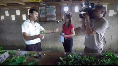 Série especial sobre o café é exibida na TV Gazeta - Reportagens serão exibidas na próxima semana.