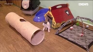 Apaixonados por gatos se reúnem no interior do RJ
