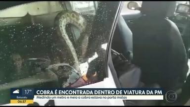 Cobra encontrada dentro de carro da polícia - Animal de um metro e meio estava no porta malas