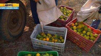 Apesar da estiagem, produtores de laranja estão positivos com a safra - Assista ao vídeo.
