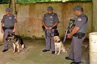 Confira a rotina dos cães Judá e Athos, famosos por participar de operações da PM - Os cães do 32º Batalhão da Polícia militar de Suzano trabalham duro para combater o crime no Alto Tietê,.