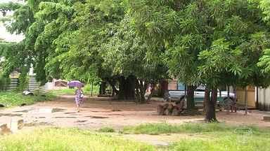 Moradores se mobilizam para impedir retirada de árvores devido obras na cidade - Na rua Paulo Maranhão, por exemplo, árvores devem ser retiradas para criação do estacionamento do Ginásio Poliesportivo, que está em construção.