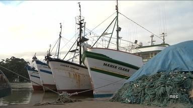 União Europeia suspende importação de pescado do Brasil; decisão afeta SC - União Europeia suspende importação de pescado do Brasil; decisão afeta SC