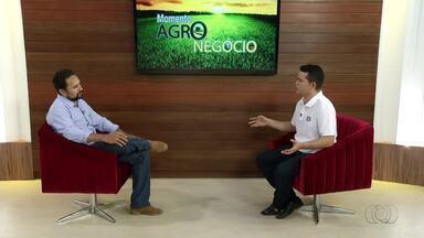 Especialista fala sobre cultivo da mandioca no Tocantins - Especialista fala sobre cultivo da mandioca no Tocantins
