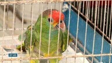 Ibama e Polícia Federal fazem operação contra tráfico de animais no ES - Em sete meses de investigação, o instituto conseguiu identificar os nomes de pessoas que vendem animais da fauna natural brasileira pela internet.