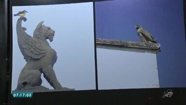 Exposição mostra a riqueza da fauna de Fortaleza - Saiba mais em g1.com.br/ce