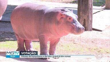 Público escolhe nomes dos filhotes de hipopótamo e lobo guará do Zoo de BH - Saiba quais são
